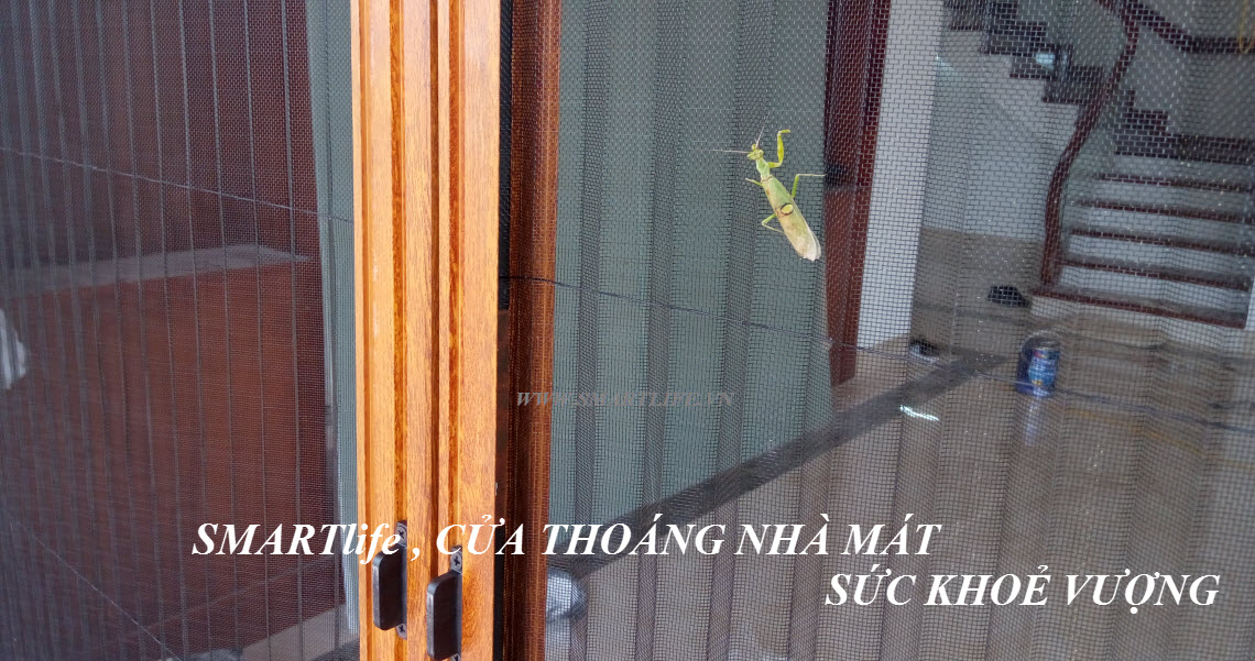 cua-chong-muoi